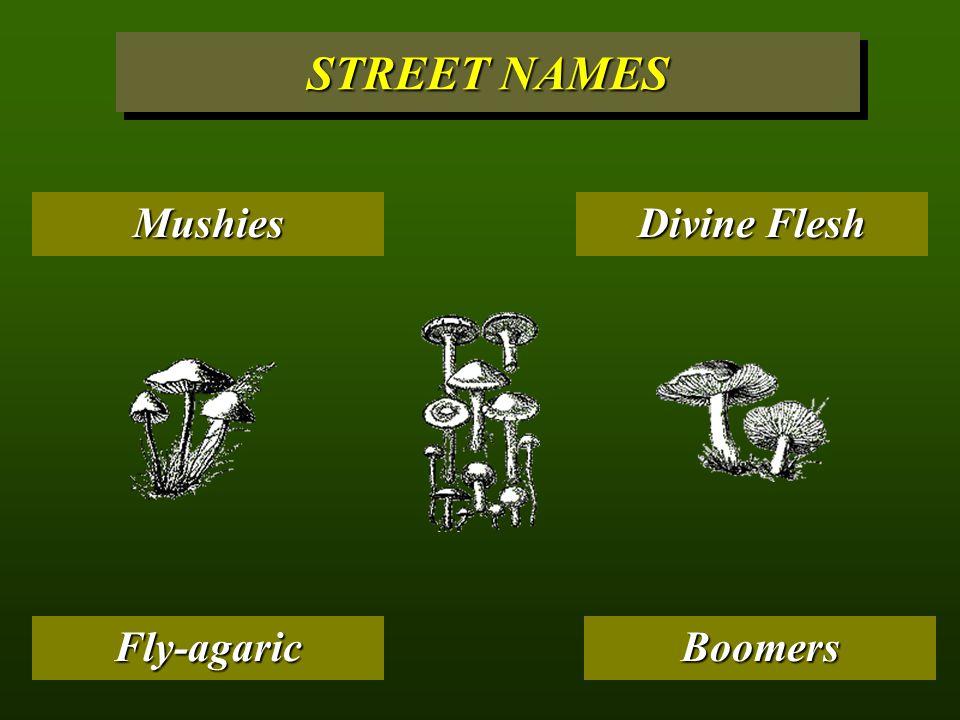 Caps STREET NAMES MushroomsHombrecitosCubesFungi Psilocybes Boomers Divine Flesh Shrooms Liberty Caps Fly-agaric Mushies
