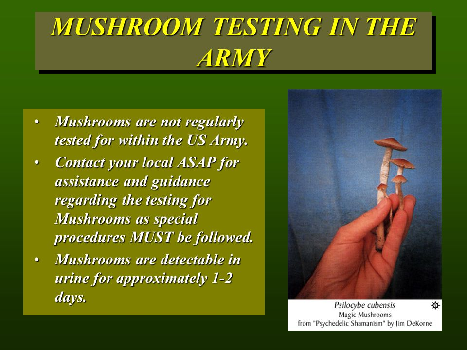 MUSHROOM TESTING IN THE ARMY Mushrooms are not regularly tested for within the US Army.Mushrooms are not regularly tested for within the US Army.
