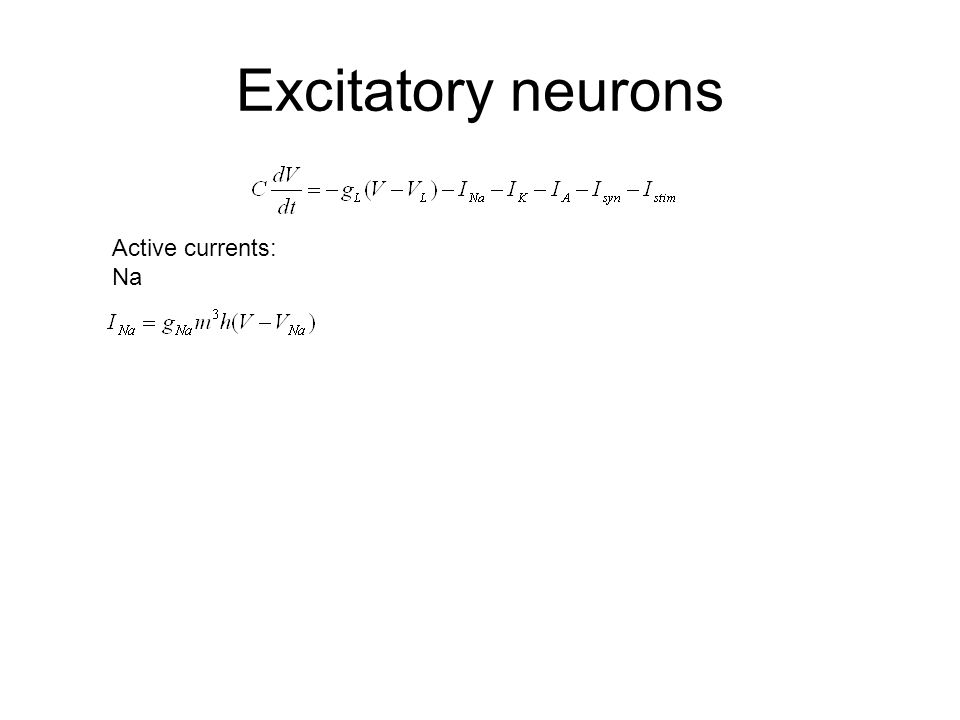 Excitatory neurons Active currents: Na