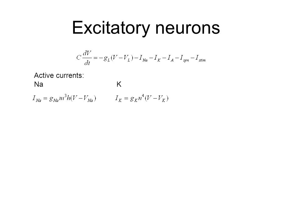Excitatory neurons Active currents: Na K