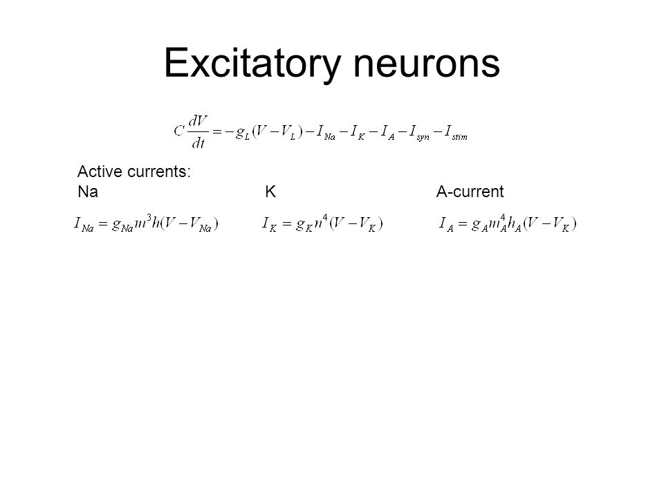 Excitatory neurons Active currents: Na K A-current
