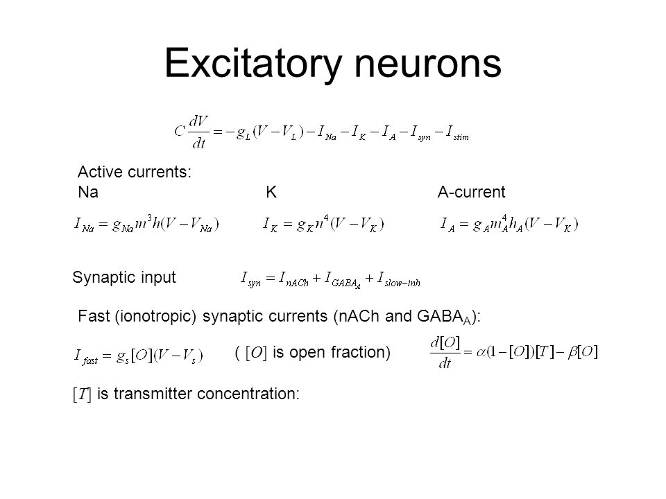 Excitatory neurons Active currents: Na K A-current Synaptic input Fast (ionotropic) synaptic currents (nACh and GABA A ): ( [O] is open fraction) [T] is transmitter concentration: