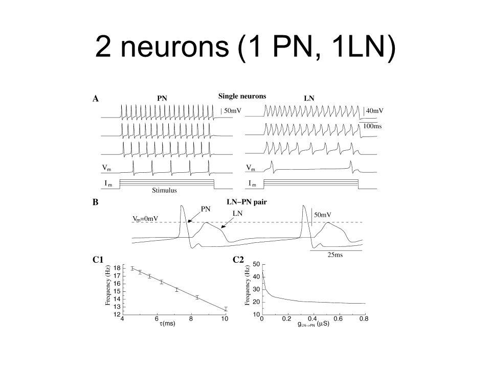 2 neurons (1 PN, 1LN)