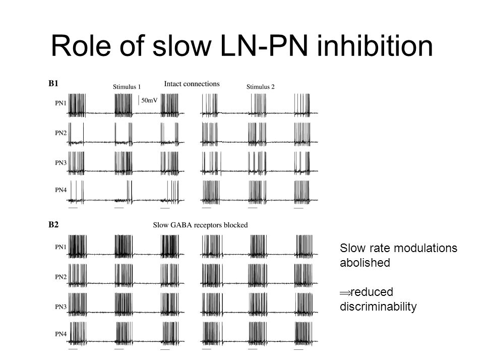Role of slow LN-PN inhibition Slow rate modulations abolished  reduced discriminability