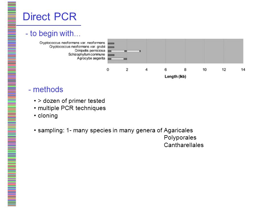 Direct PCR > dozen of primer tested multiple PCR techniques cloning sampling: 1- many species in many genera of - to begin with...