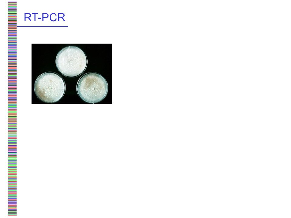Barcoding mushrooms with COI direct PCR: short regions only, although Long-PCR possible RT-PCR: feasible, including for sporocarps tissue storage in RNALater feasible multiple copies; with / without introns conclusions