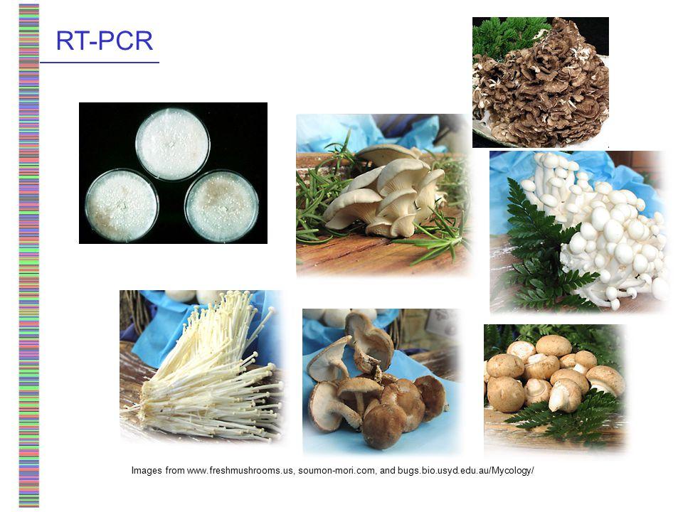 Images from www.freshmushrooms.us, soumon-mori.com, and bugs.bio.usyd.edu.au/Mycology/ RT-PCR