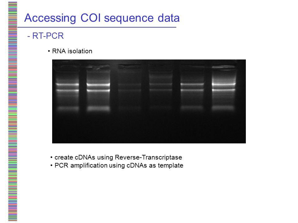 Accessing COI sequence data - RT-PCR RNA isolation create cDNAs using Reverse-Transcriptase PCR amplification using cDNAs as template