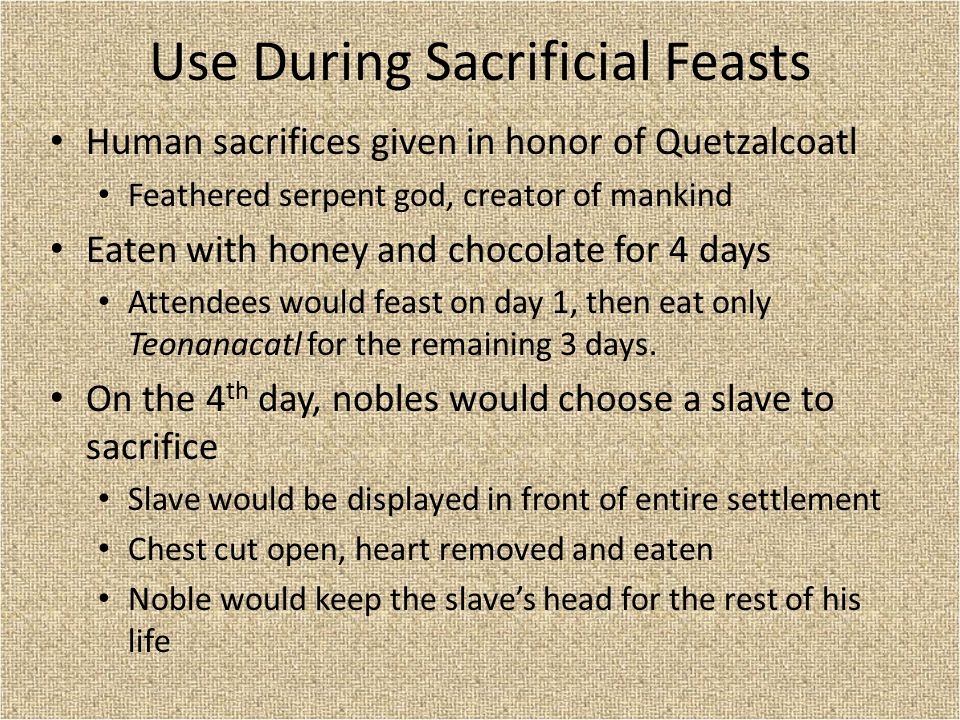 Use During Sacrificial Feasts Human sacrifices given in honor of Quetzalcoatl Feathered serpent god, creator of mankind Eaten with honey and chocolate for 4 days Attendees would feast on day 1, then eat only Teonanacatl for the remaining 3 days.