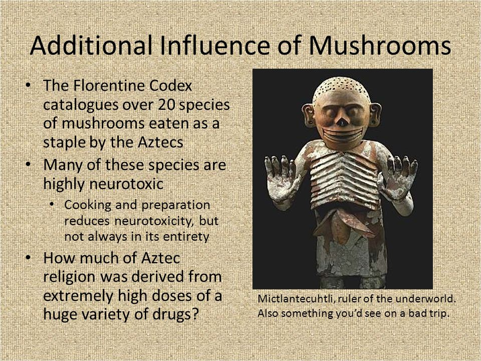 Additional Influence of Mushrooms The Florentine Codex catalogues over 20 species of mushrooms eaten as a staple by the Aztecs Many of these species a