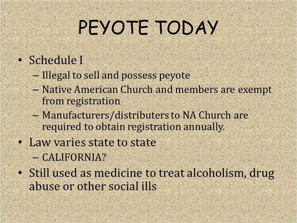 PEYOTE TODAY Schedule I – Illegal to sell and possess peyote – Native American Church and members are exempt from registration – Manufacturers/distributers to NA Church are required to obtain registration annually.