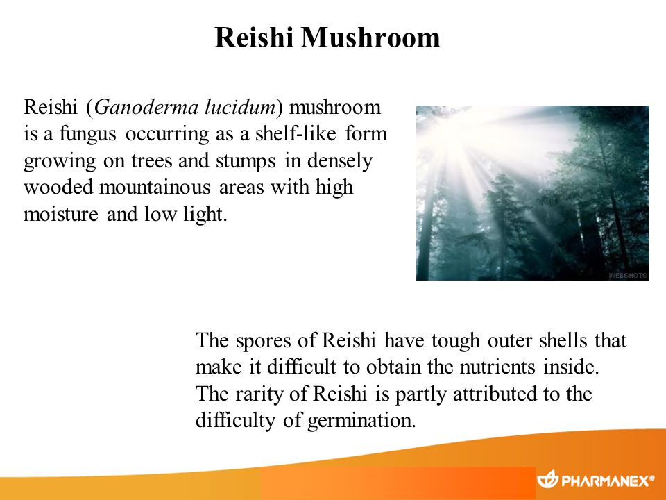 Reishi Mushroom Reishi (Ganoderma lucidum) mushroom is a fungus occurring as a shelf-like form growing on trees and stumps in densely wooded mountaino