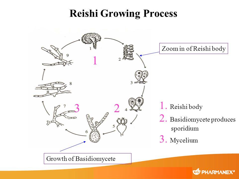 Reishi Growing Process 1. Reishi body 2. Basidiomycete produces sporidium 3. Mycelium 1 23 Zoom in of Reishi body Growth of Basidiomycete