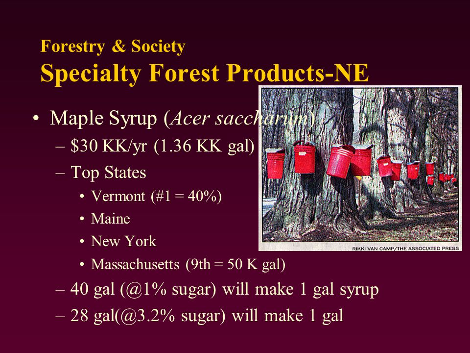 Maple Syrup (Acer saccharum) –$30 KK/yr (1.36 KK gal) –Top States Vermont (#1 = 40%) Maine New York Massachusetts (9th = 50 K gal) –40 gal (@1% sugar) will make 1 gal syrup –28 gal(@3.2% sugar) will make 1 gal Forestry & Society Specialty Forest Products-NE
