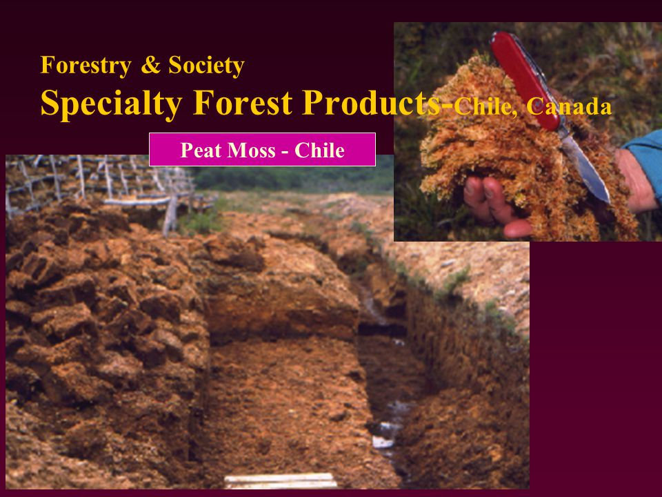 Forestry & Society Specialty Forest Products- Chile, Canada Peat Moss - Chile