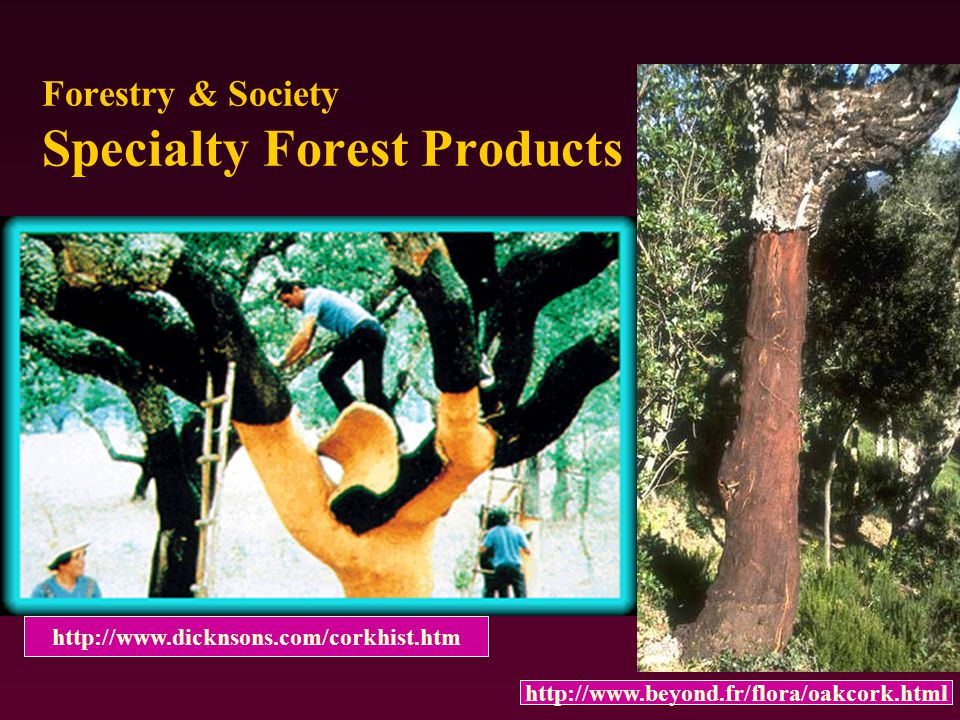 Forestry & Society Specialty Forest Products http://www.dicknsons.com/corkhist.htm http://www.beyond.fr/flora/oakcork.html