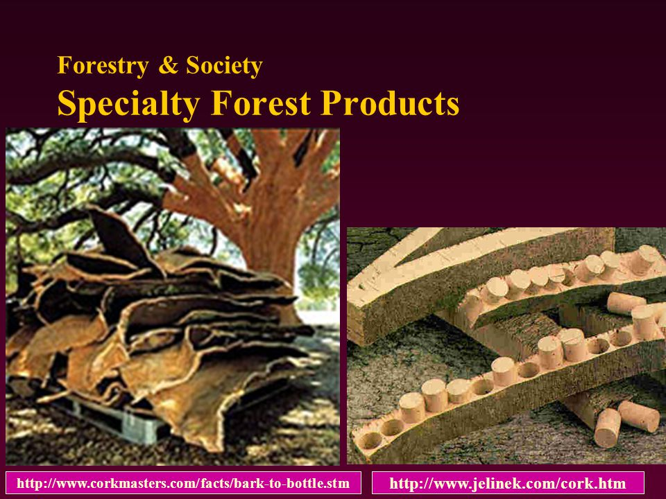http://www.jelinek.com/cork.htm Forestry & Society Specialty Forest Products http://www.corkmasters.com/facts/bark-to-bottle.stm