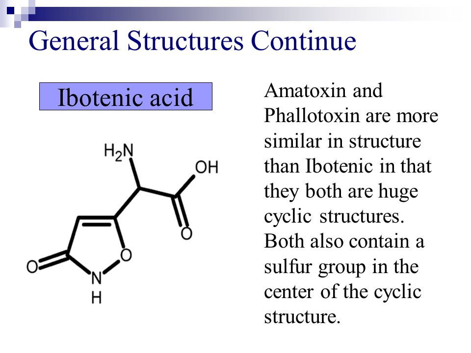 General Structures Continue Ibotenic acid Amatoxin and Phallotoxin are more similar in structure than Ibotenic in that they both are huge cyclic struc