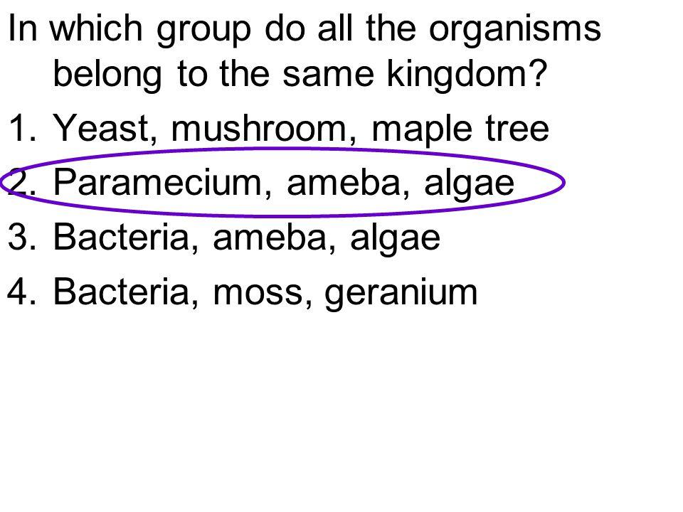 In which group do all the organisms belong to the same kingdom? 1.Yeast, mushroom, maple tree 2.Paramecium, ameba, algae 3.Bacteria, ameba, algae 4.Ba
