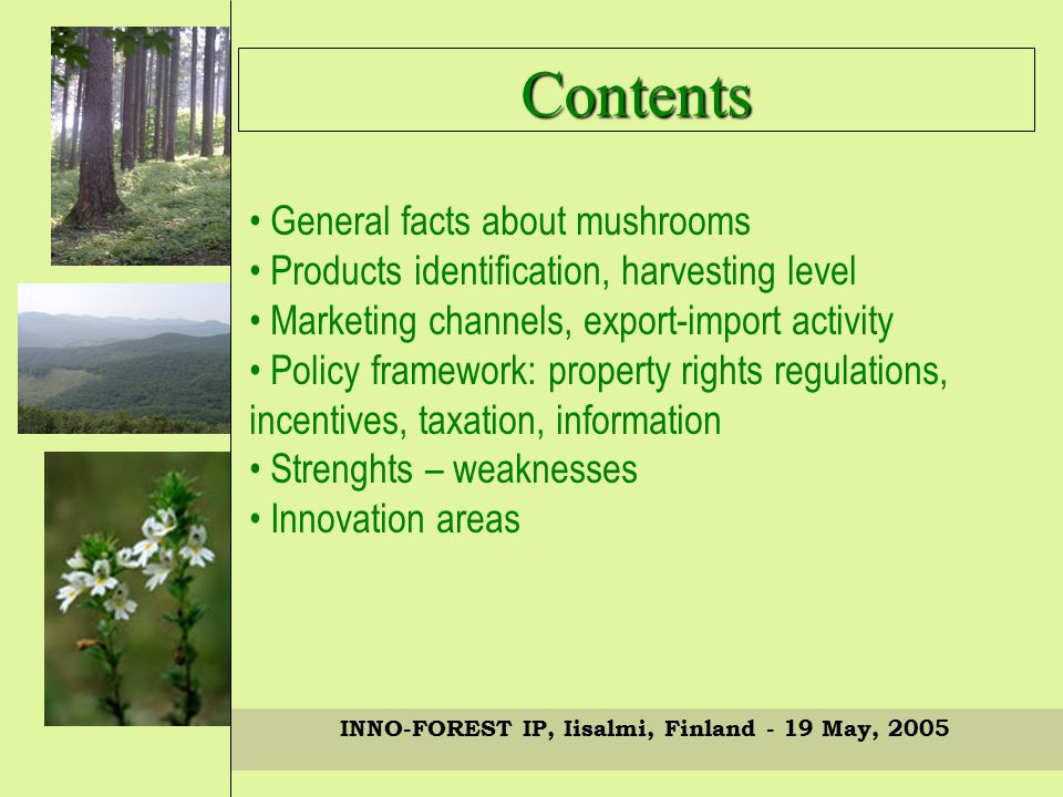 INNO-FOREST IP, Iisalmi, Finland - 19 May, 2005 General facts about mushrooms Products identification, harvesting level Marketing channels, export-import activity Policy framework: property rights regulations, incentives, taxation, information Strenghts – weaknesses Innovation areas Contents