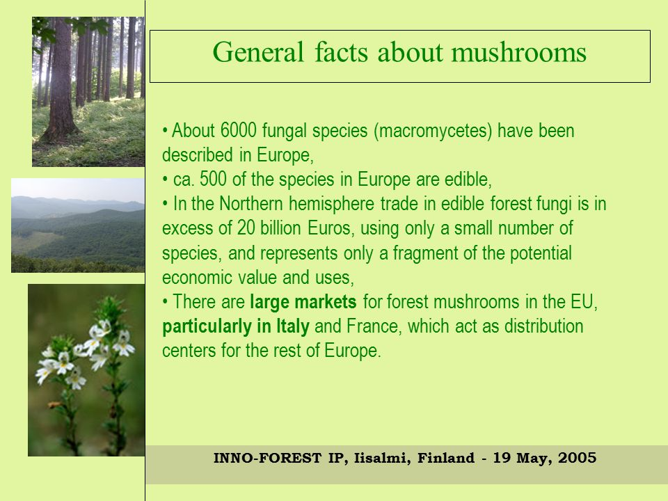 INNO-FOREST IP, Iisalmi, Finland - 19 May, 2005 About 6000 fungal species (macromycetes) have been described in Europe, ca.