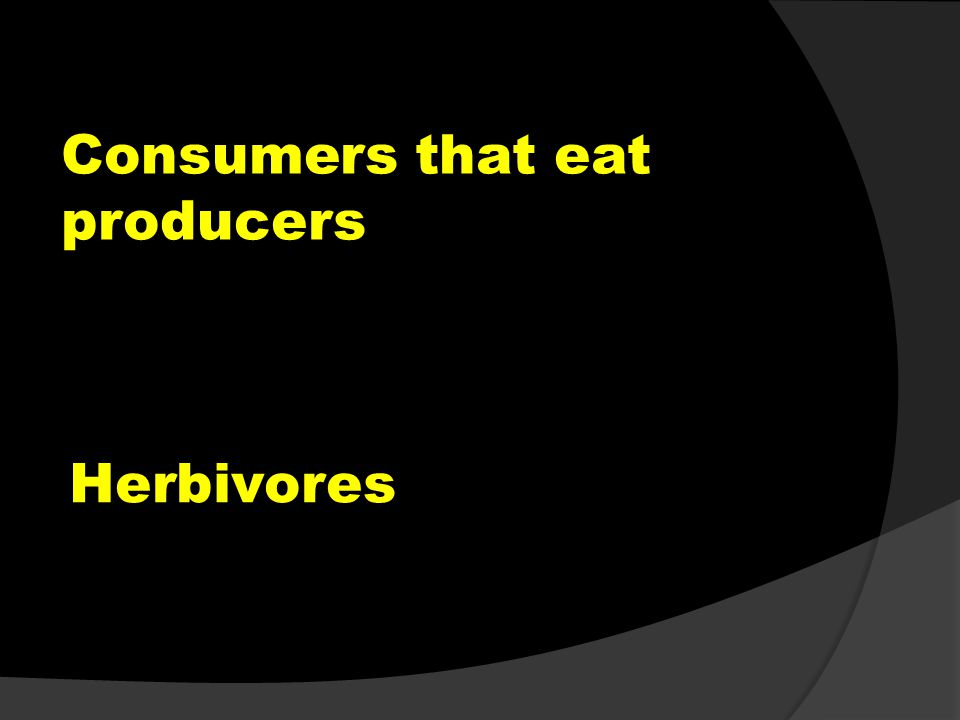 Consumers that eat producers Herbivores