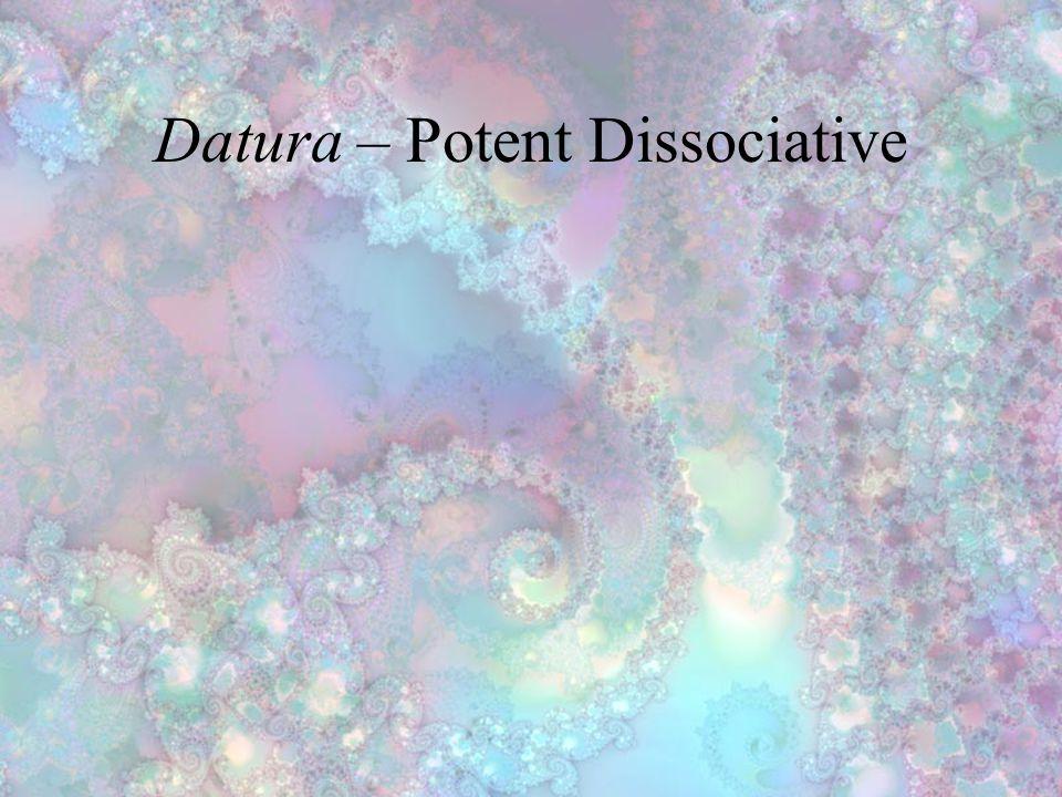 Datura – Potent Dissociative