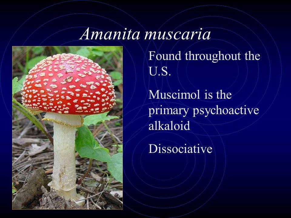 Amanita muscaria Found throughout the U.S.