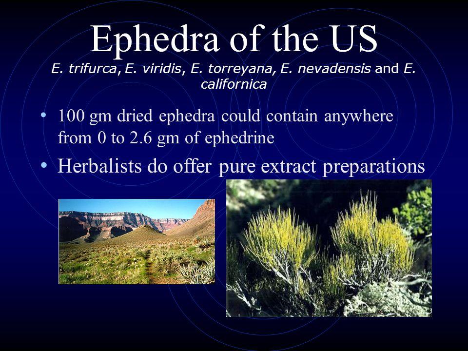 Ephedra of the US E. trifurca, E. viridis, E. torreyana, E.