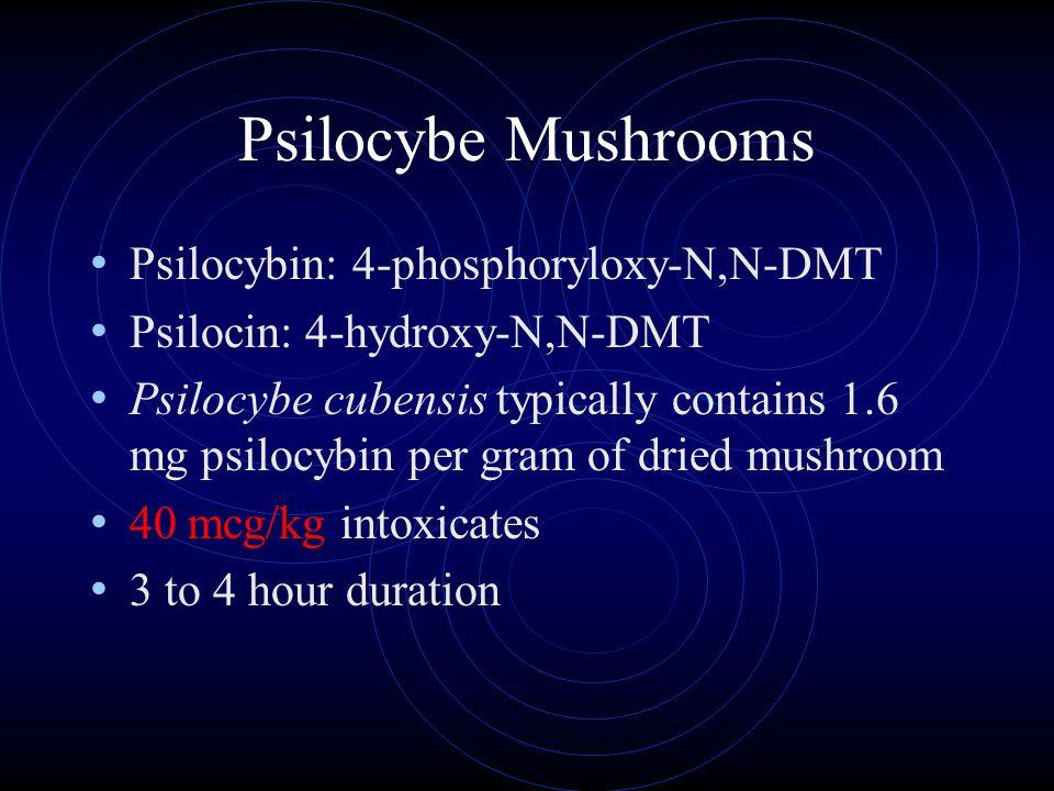 Psilocybe Mushrooms Psilocybin: 4-phosphoryloxy-N,N-DMT Psilocin: 4-hydroxy-N,N-DMT Psilocybe cubensis typically contains 1.6 mg psilocybin per gram of dried mushroom 40 mcg/kg intoxicates 3 to 4 hour duration