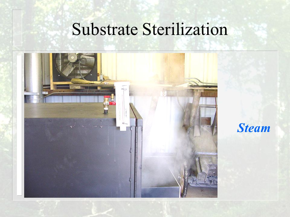 Substrate Sterilization Steam