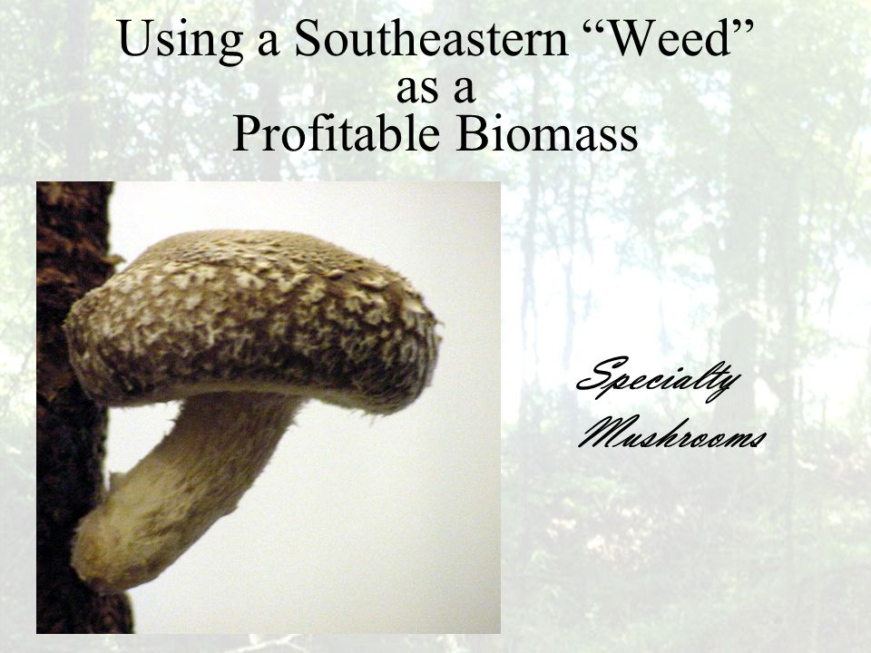 Maximizing Waste Biomass… To Produce Profits for Farmers Joe Buzhardt Program Director / Research Scientist Specialty Mushroom Program Mississippi Small Farm Development Center At Alcorn State University