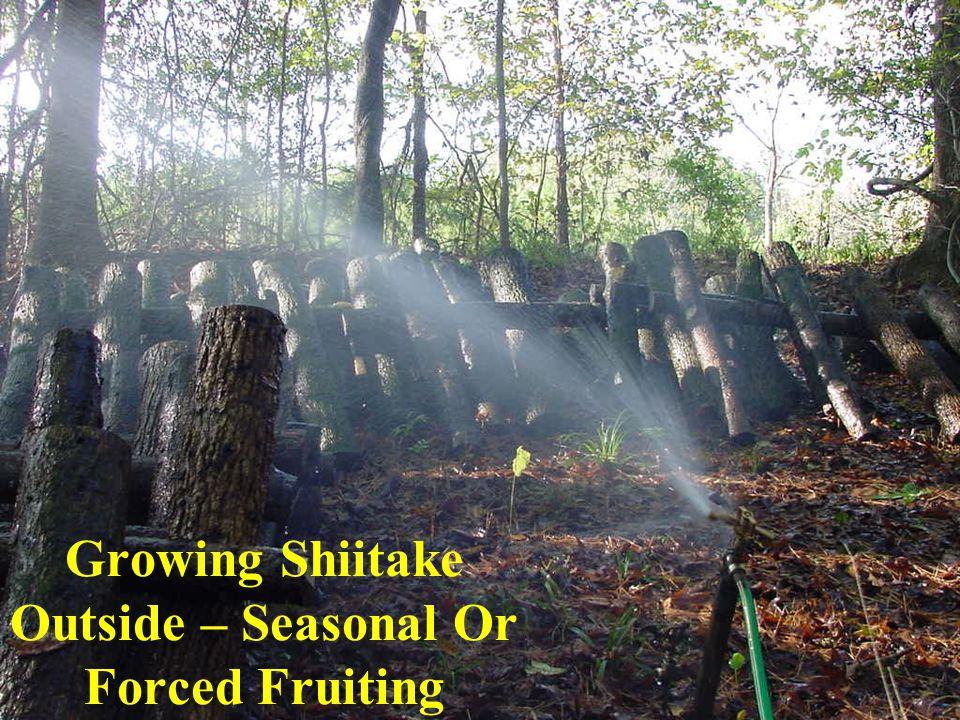 Growing Shiitake Outside – Seasonal Or Forced Fruiting