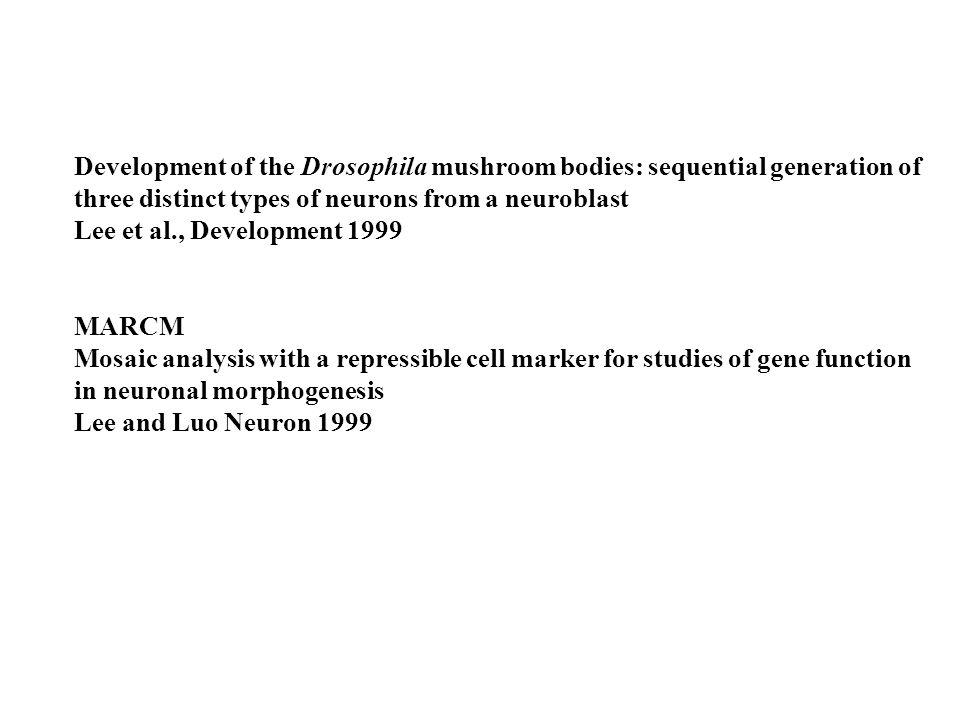 Noveen et al., Development 2000 Neuroblasts in the head and trunk