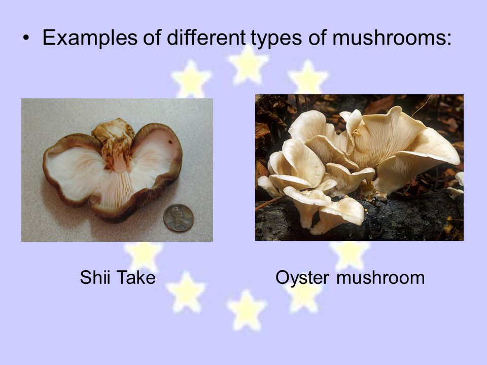 Examples of different types of mushrooms: Shii TakeOyster mushroom