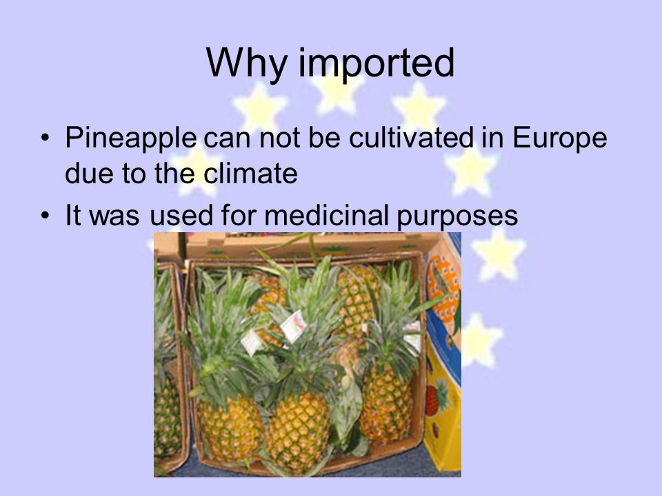 Why imported Pineapple can not be cultivated in Europe due to the climate It was used for medicinal purposes