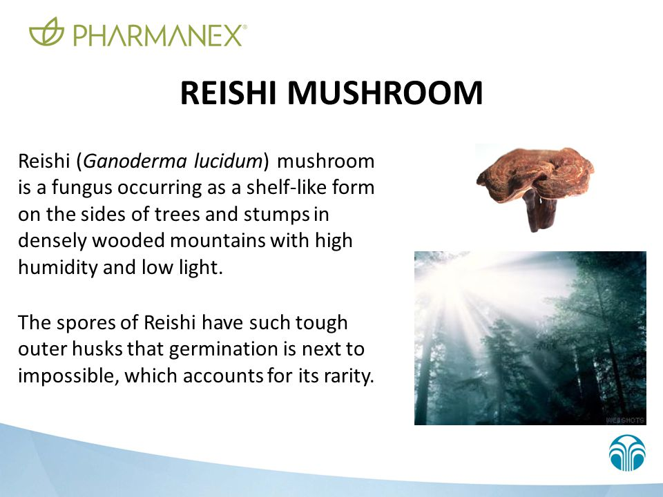 TYPES OF REISHI There are 62 types of Reishi, of which six are most common: RED BLACK BLUE WHITE YELLOW PURPLE RED Reishi is preferred because it can produce the highest quality extract and has been subject to the most scientific evaluation