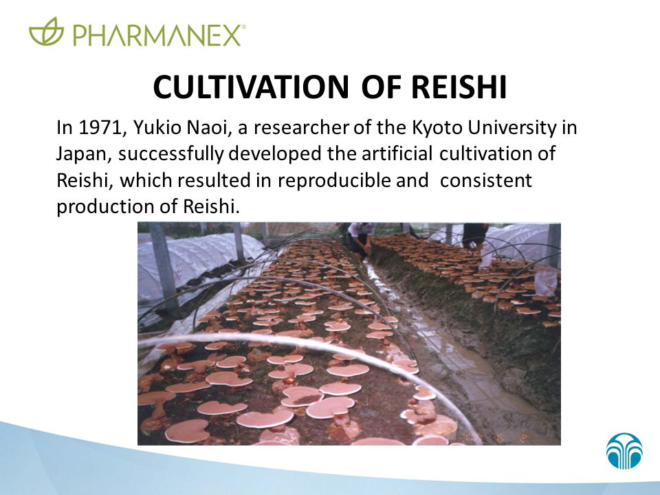 REISHI SPORES These highly active substances are the essence of Reishi.