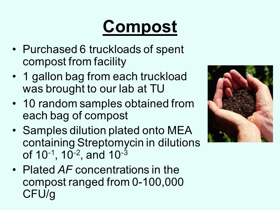 Compost Purchased 6 truckloads of spent compost from facility 1 gallon bag from each truckload was brought to our lab at TU 10 random samples obtained from each bag of compost Samples dilution plated onto MEA containing Streptomycin in dilutions of 10 -1, 10 -2, and 10 -3 Plated AF concentrations in the compost ranged from 0-100,000 CFU/g