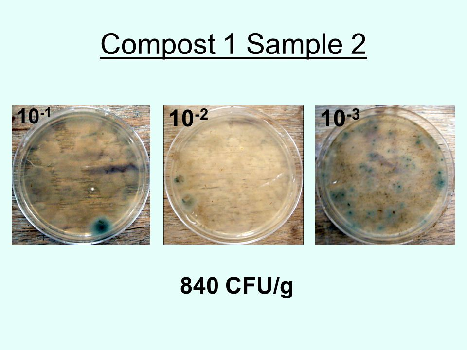 Compost 1 Sample 2 10 -1 10 -2 10 -3 840 CFU/g