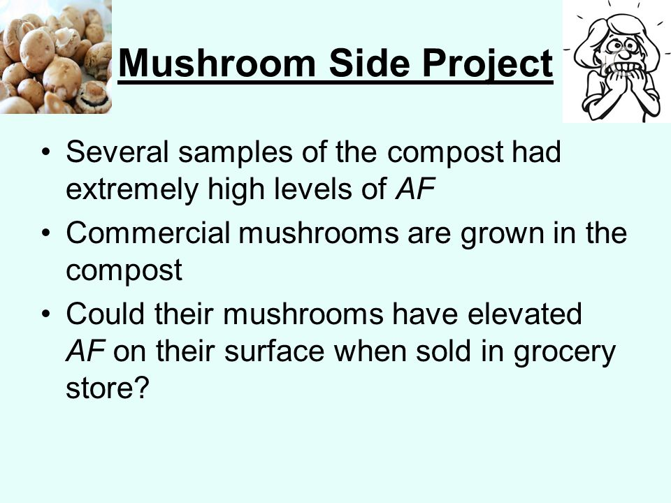 Mushroom Side Project Several samples of the compost had extremely high levels of AF Commercial mushrooms are grown in the compost Could their mushrooms have elevated AF on their surface when sold in grocery store