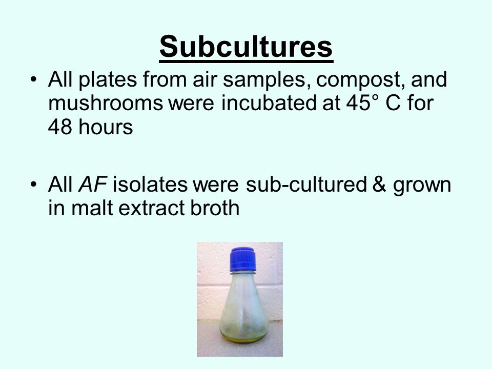 Subcultures All plates from air samples, compost, and mushrooms were incubated at 45° C for 48 hours All AF isolates were sub-cultured & grown in malt extract broth