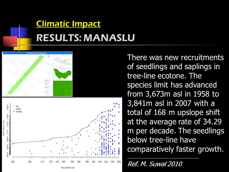 Climatic Impact RESULTS: MANASLU There was new recruitments of seedlings and saplings in tree-line ecotone.