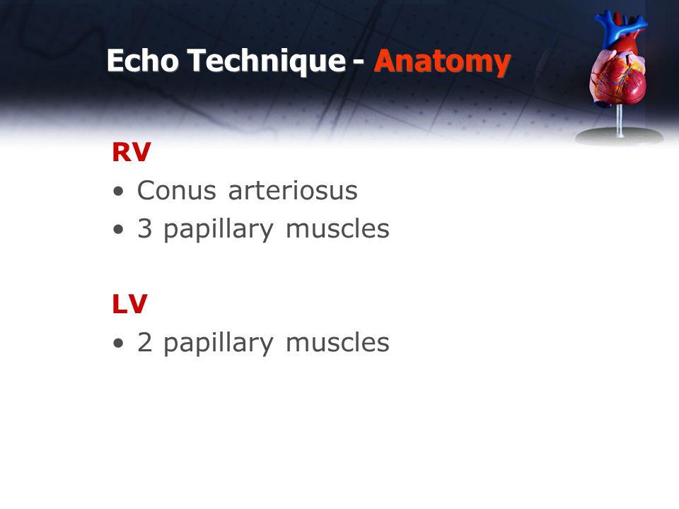 Echo Technique - Anatomy RV Conus arteriosus 3 papillary muscles LV 2 papillary muscles