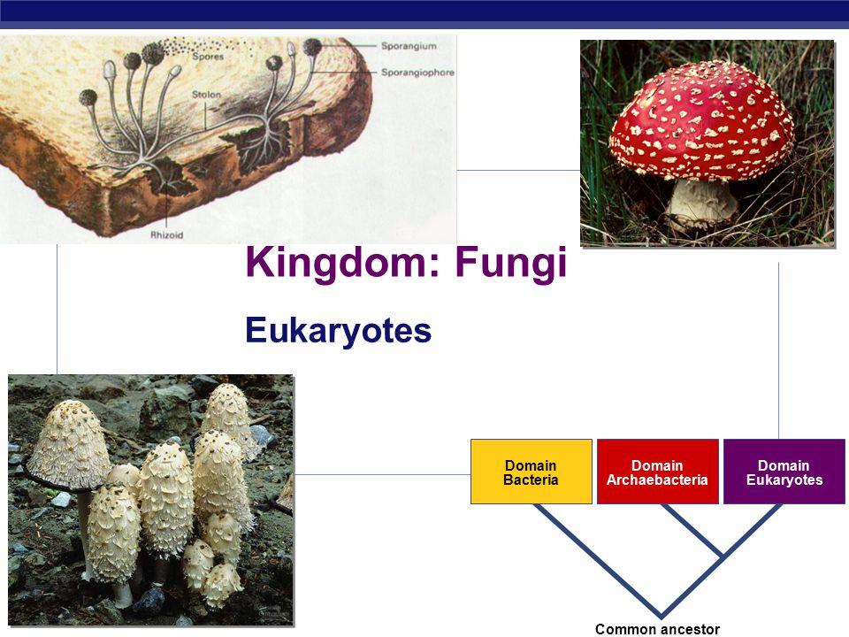 AP Biology 2007-2008 Kingdom: Fungi Eukaryotes Domain Bacteria Domain Archaebacteria Domain Eukaryotes Common ancestor