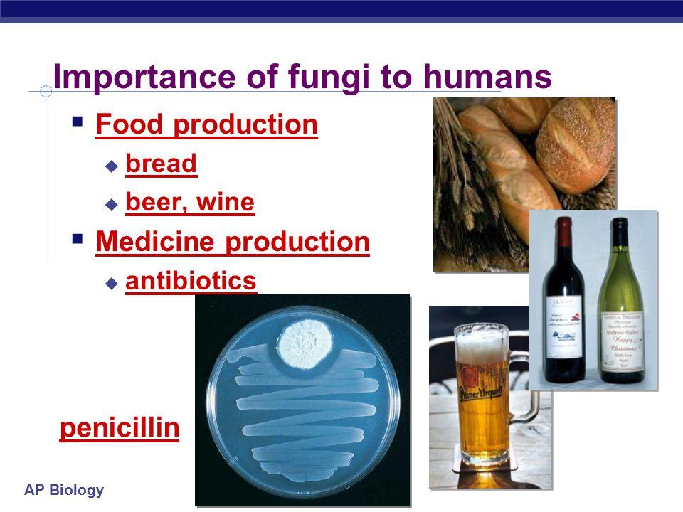 AP Biology Importance of fungi to humans  Food production  bread  beer, wine  Medicine production  antibiotics penicillin