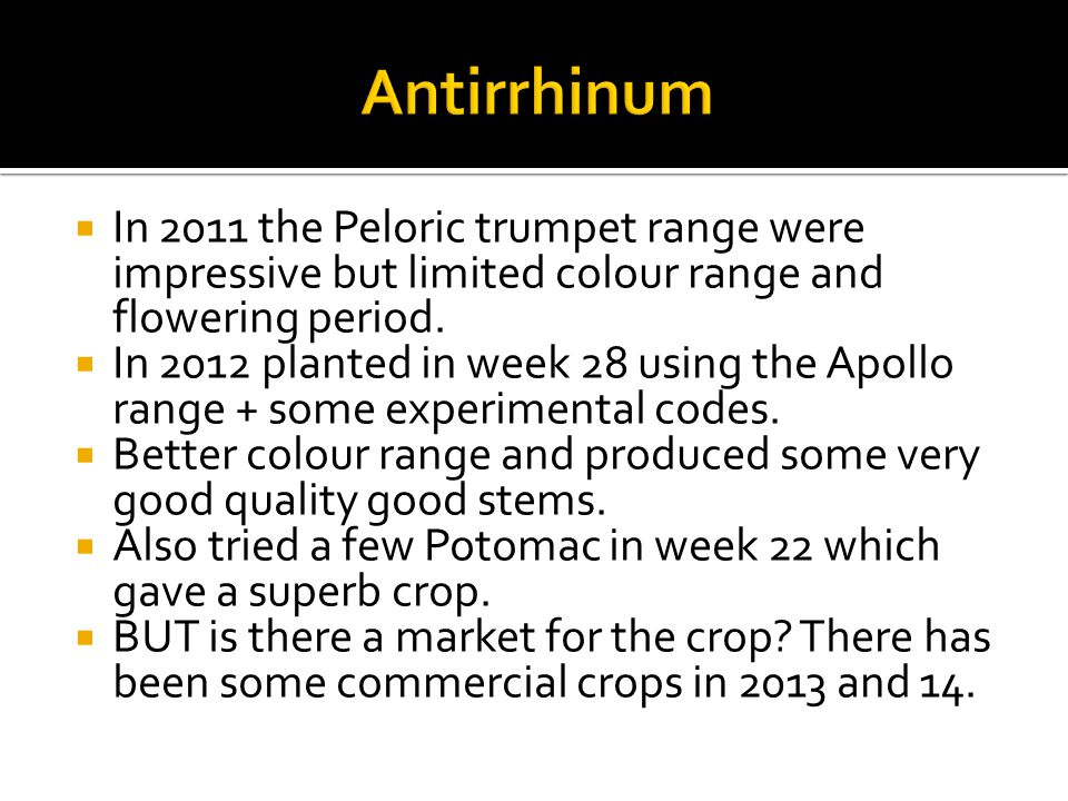  In 2011 the Peloric trumpet range were impressive but limited colour range and flowering period.