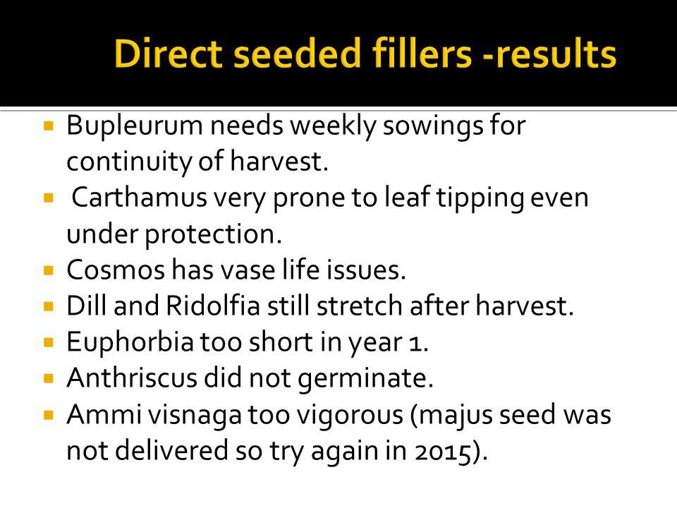  Bupleurum needs weekly sowings for continuity of harvest.
