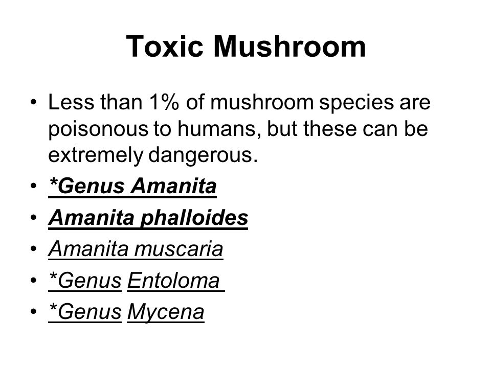 Toxic Mushroom Less than 1% of mushroom species are poisonous to humans, but these can be extremely dangerous. *Genus Amanita Amanita phalloides Amani