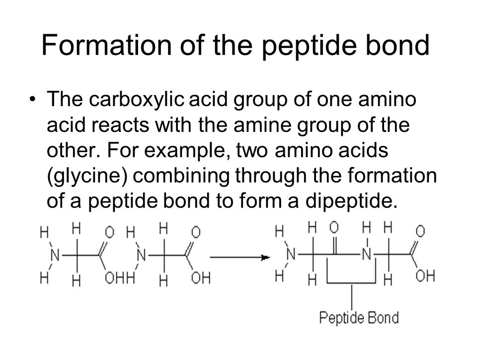 Formation of the peptide bond The carboxylic acid group of one amino acid reacts with the amine group of the other. For example, two amino acids (glyc